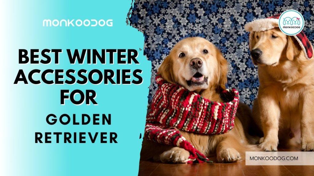 best winter accessories for golden retriever