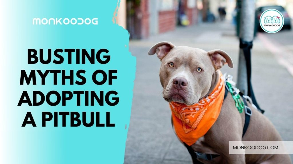 busting myths of adopting a pitbull
