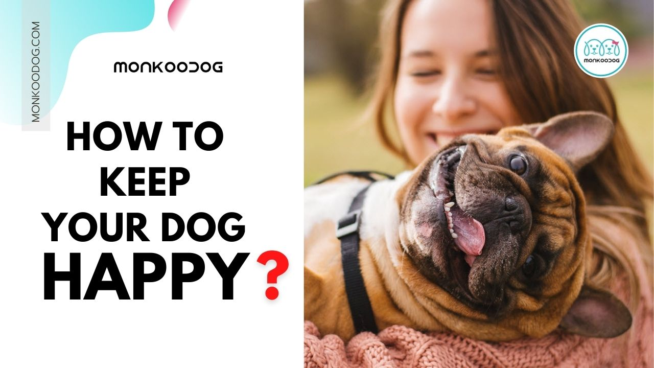 how to keep your dog happy
