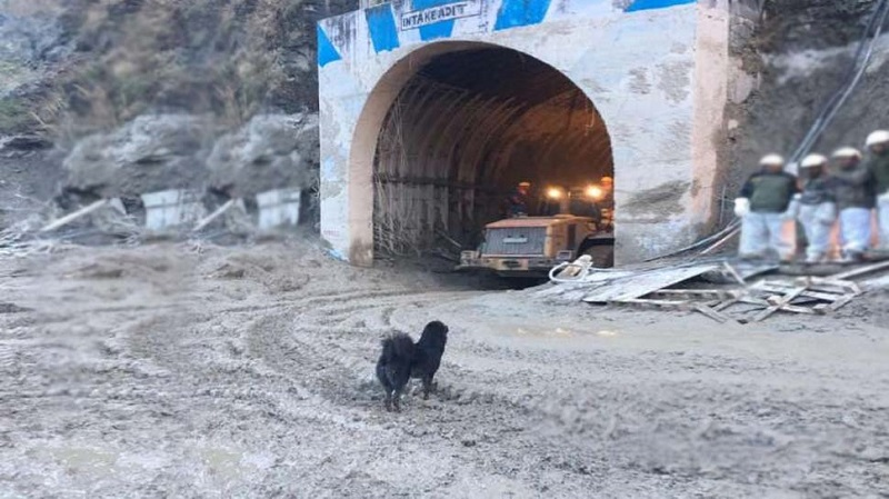 761001-black-dog