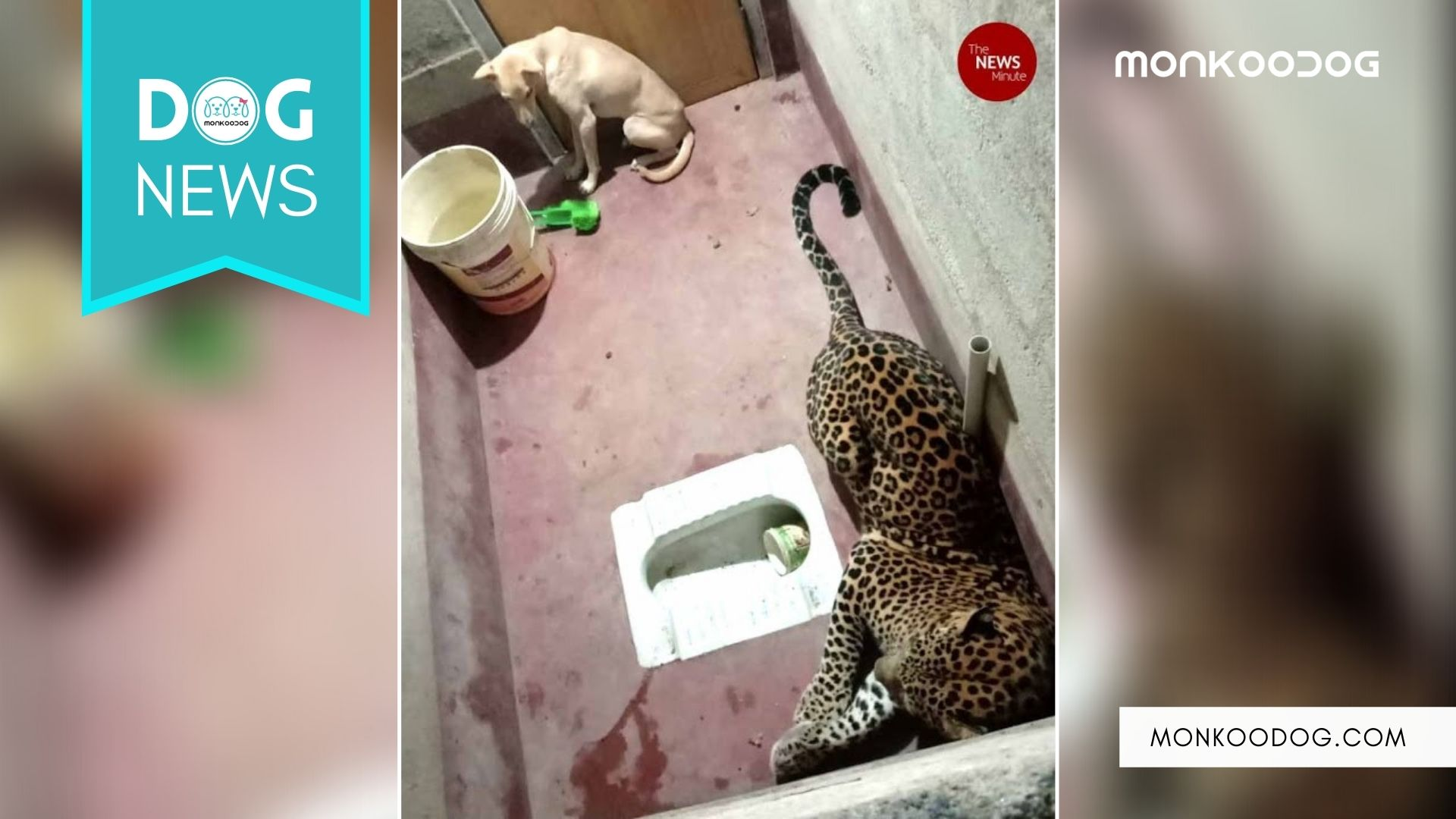 A Dog got trapped with a Leopard for a night in the bathroom of Karnataka, India.