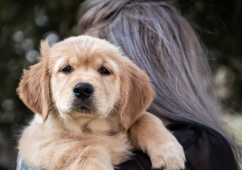 Best Dog Variety For Scorpio