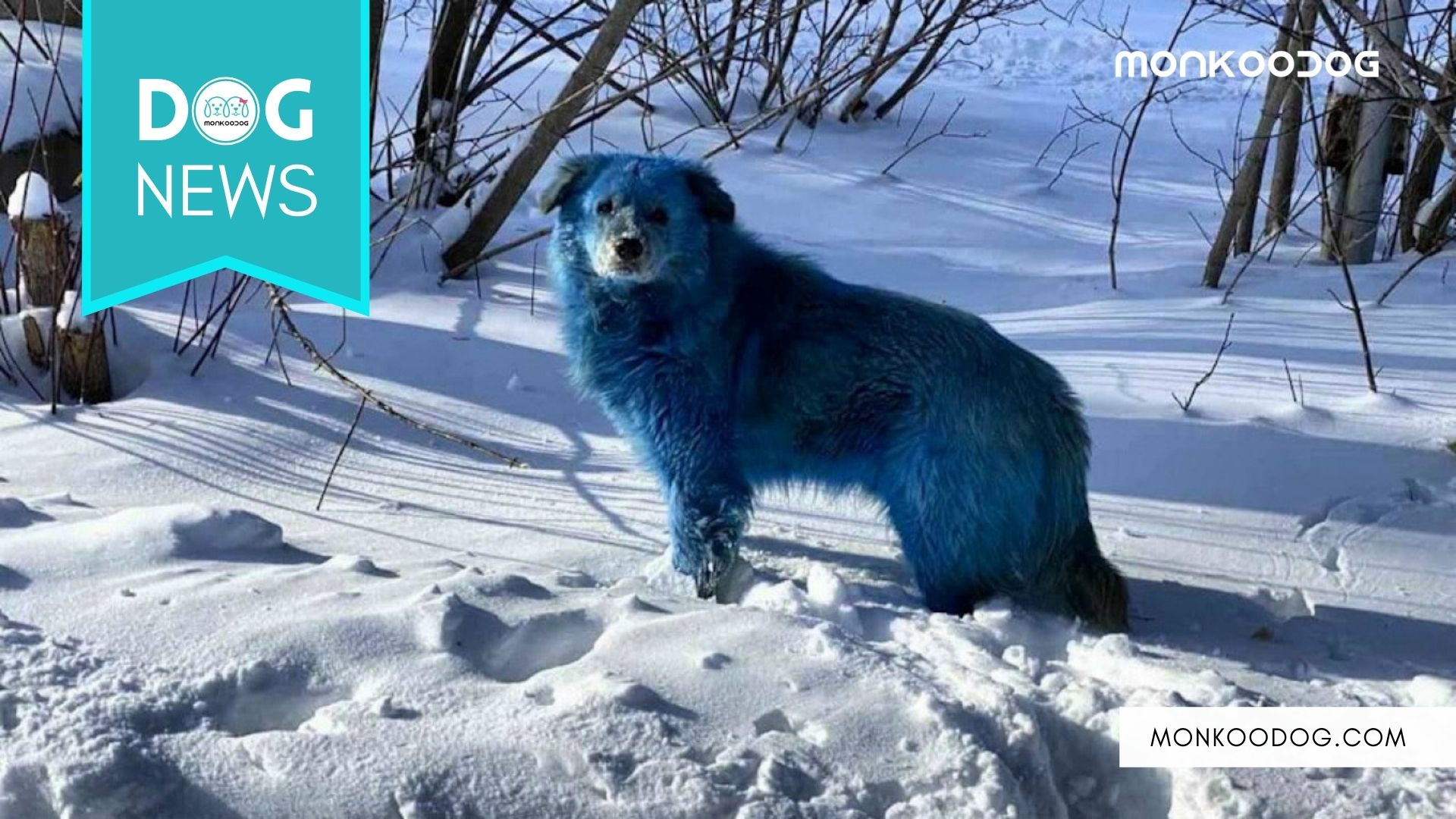 Blue Dog thoroughly roaming around an abandoned factory in Russia creates mass hysteria amidst pet lovers worldwide
