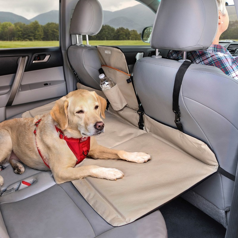 Designate a place for your Dog in the Car