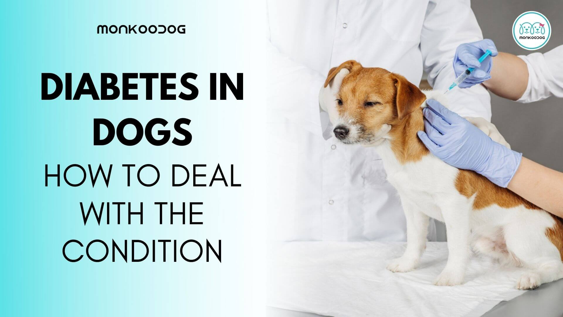 Dog Diabetes_ How To Deal With The Condition