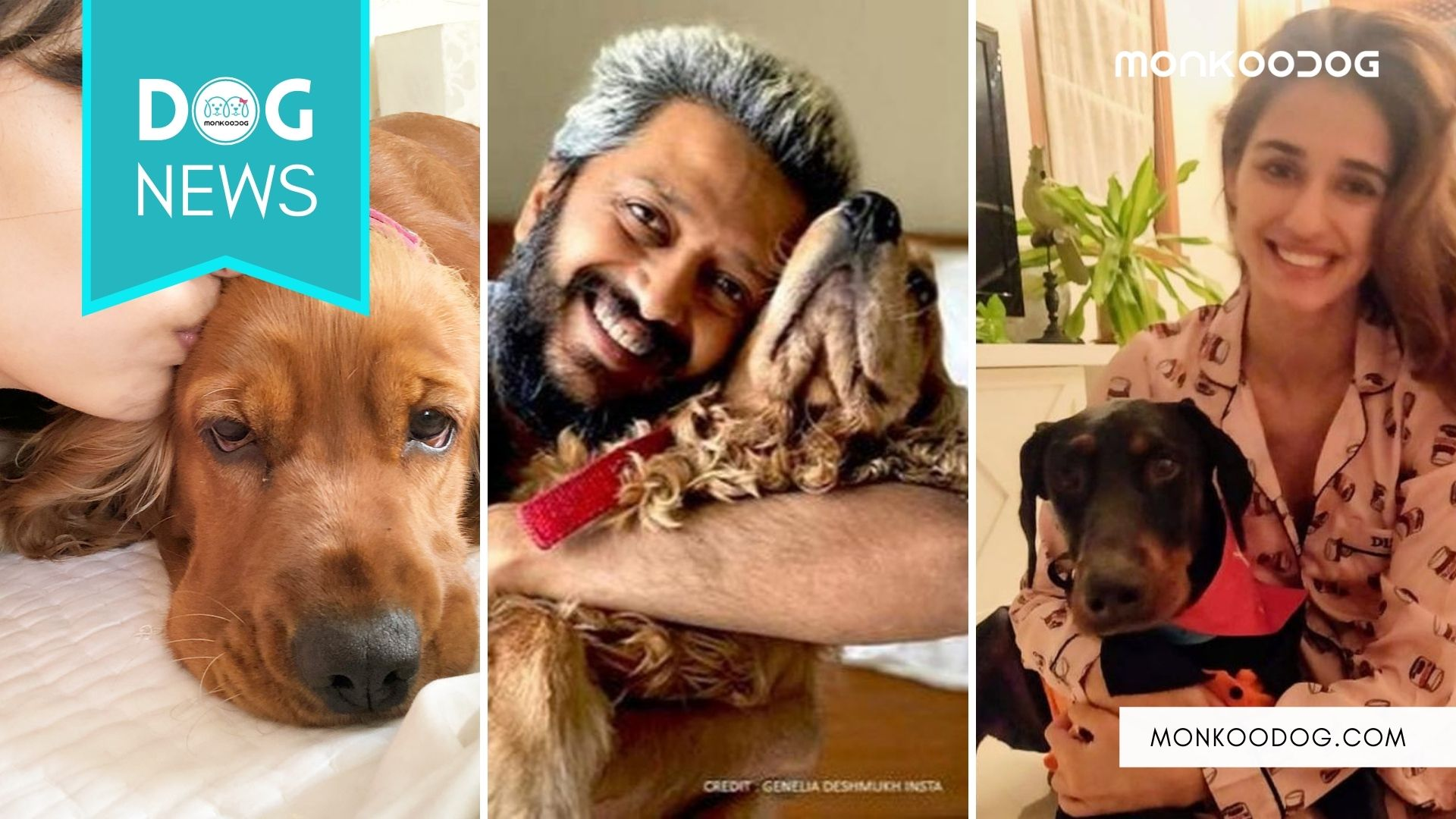 From Disha Patani to Riteish Deshmukh, Pet love seems to be the new celeb stories of social media in 2021