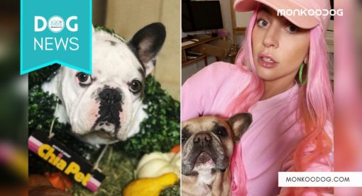 Grammy Singer Lady Gaga's dogs stolen and dog walker shot in Los Angeles