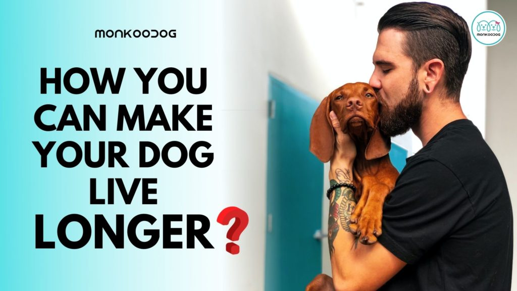 How You Can Make Your Dog Live Longer And A Healthier Life