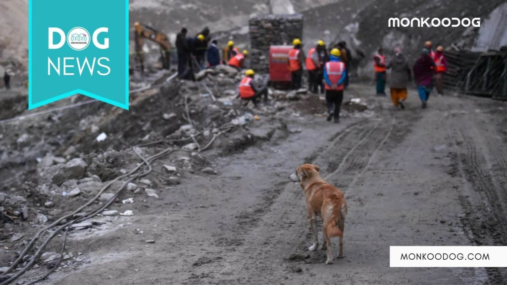 One week after the Uttarakhand Flood, two dogs keep coming back in search of the lost loved ones!