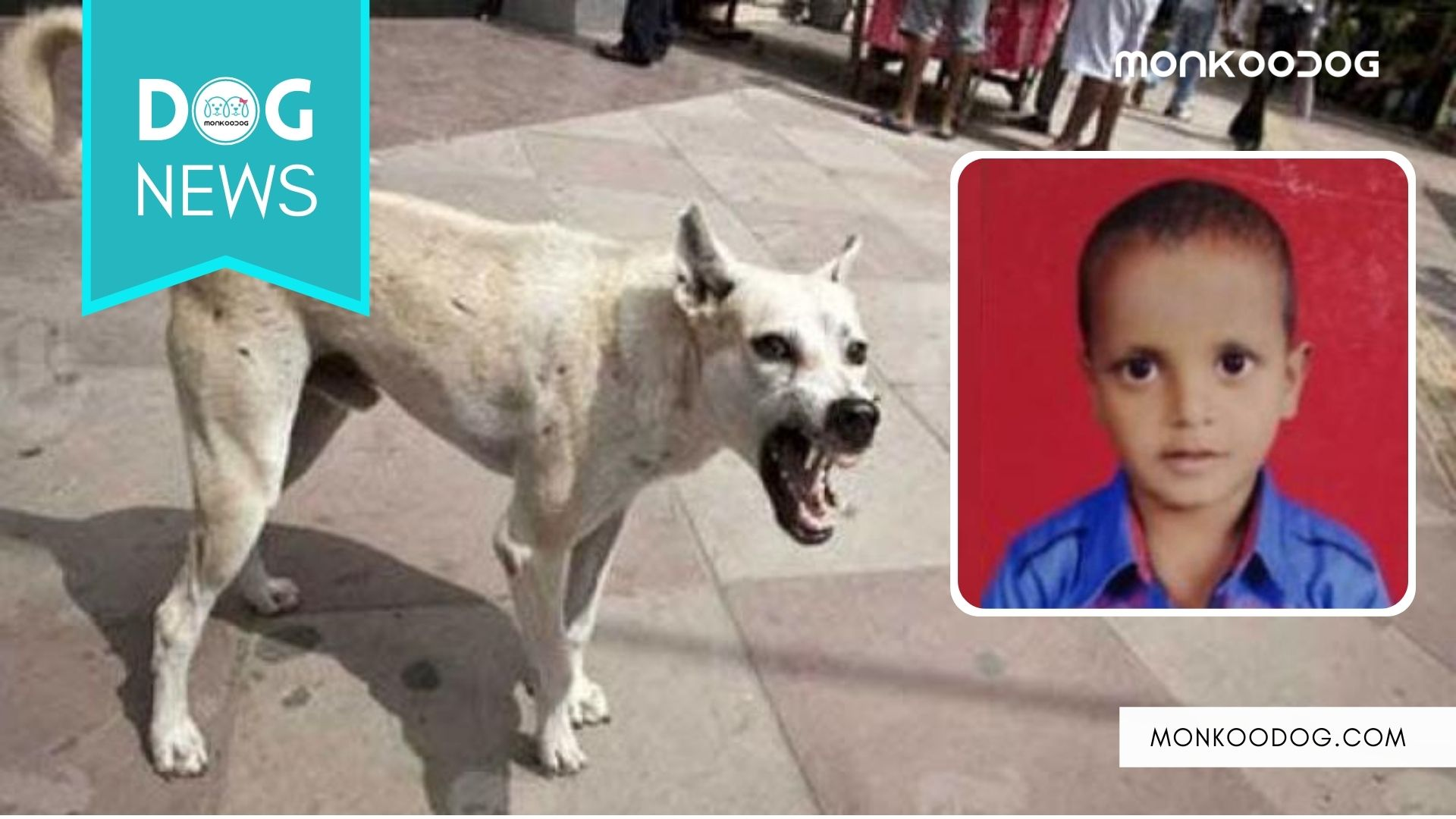 One world, two different viral news, a dog saves a life while the other mauls one to death.