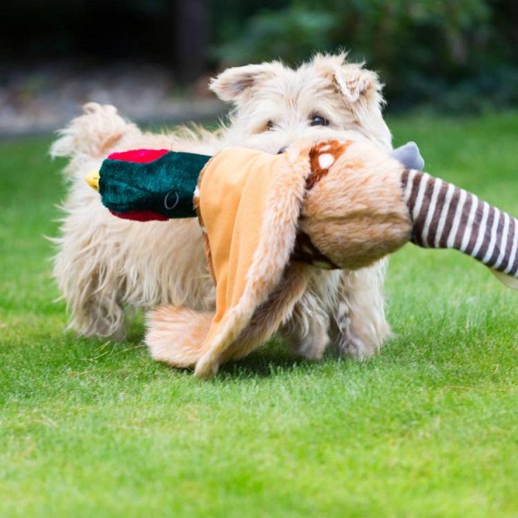 Plush Pheasant Dog Toy