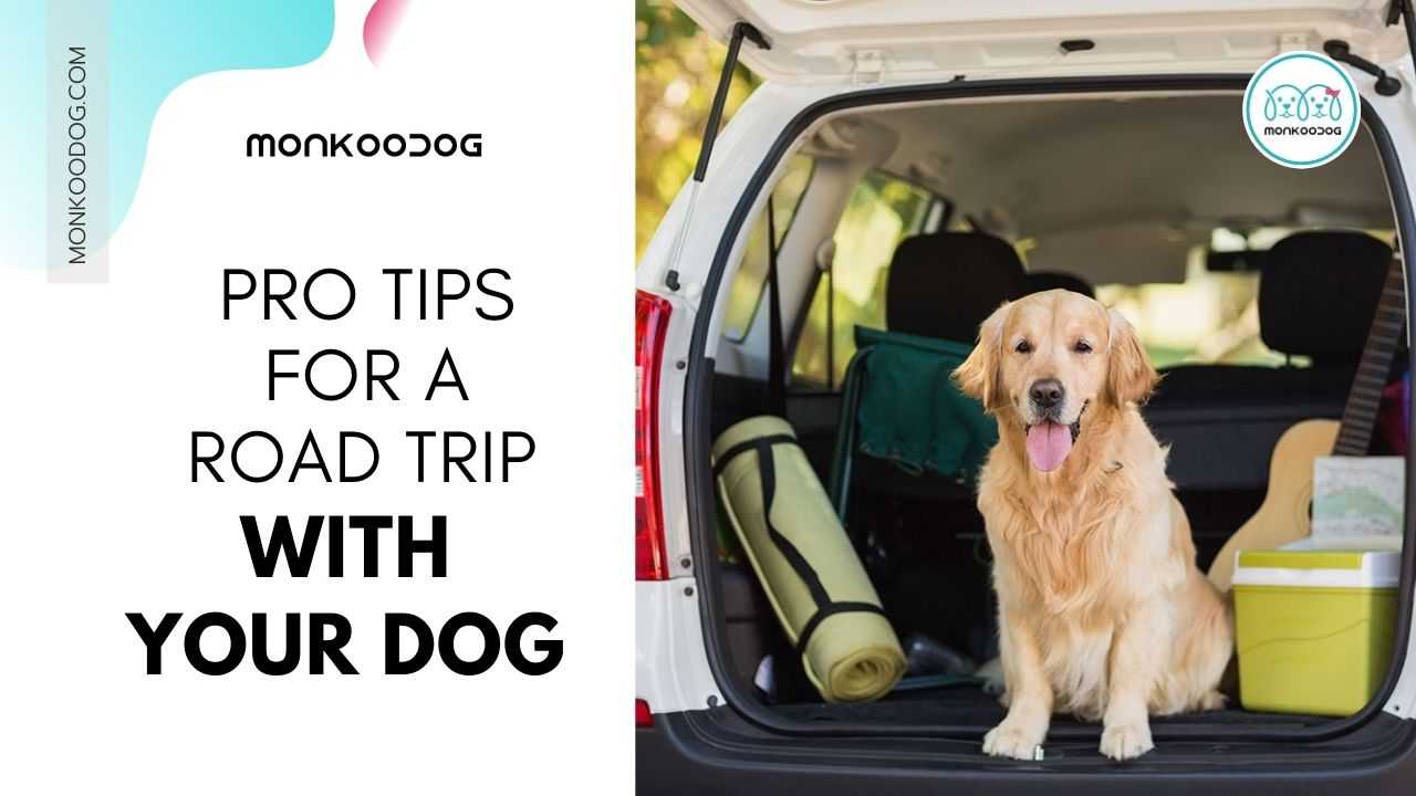 Pro Tips For A Road Trip With Your Dog