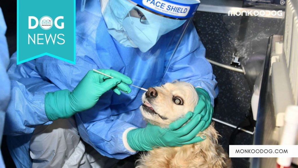 South Korean Dog test positive for Covid 19 virus after owner also reported as positive