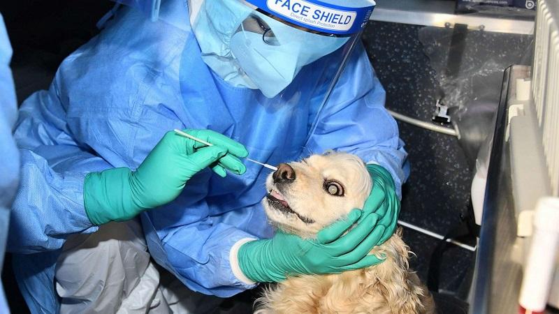 South Korean Dog test positive