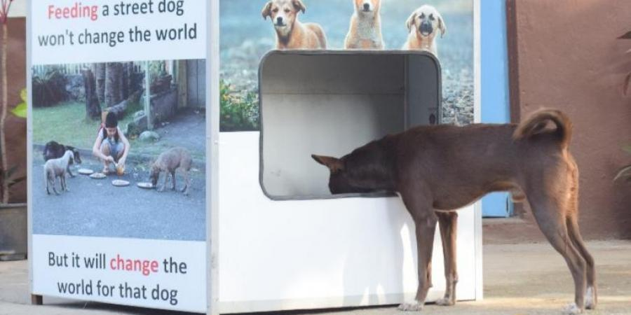 Stray dogs will get food and water