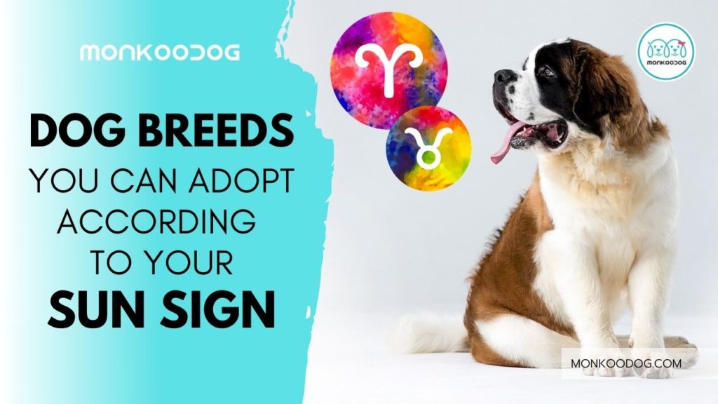 The dog breed you should adopt according to your zodiac signThe dog breed you should adopt according to your zodiac sign