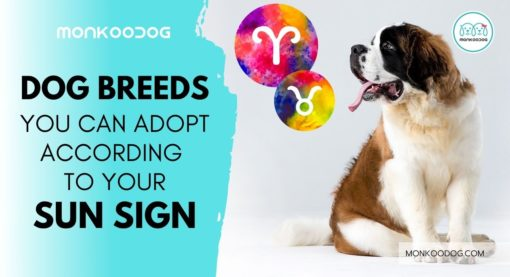 The dog breed you should adopt according to your zodiac sign
