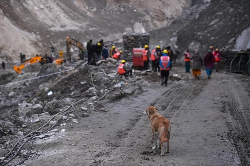 Glacier burst: A dog waits for its puppies