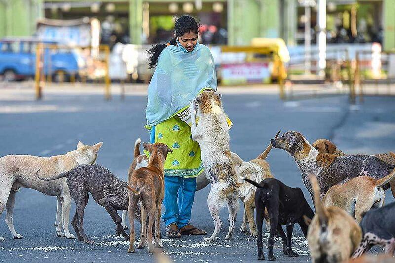 aparna-pic-dog-feeding