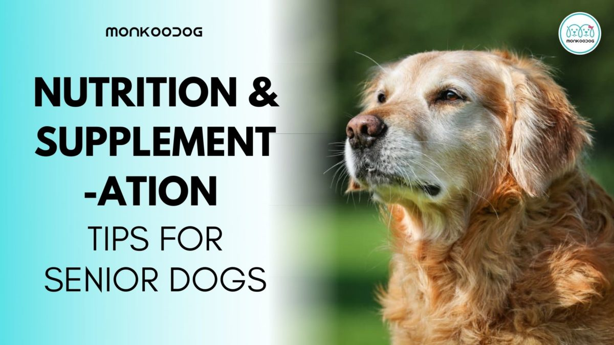 3 Nutrition and Supplementation Tips for Senior Dogs