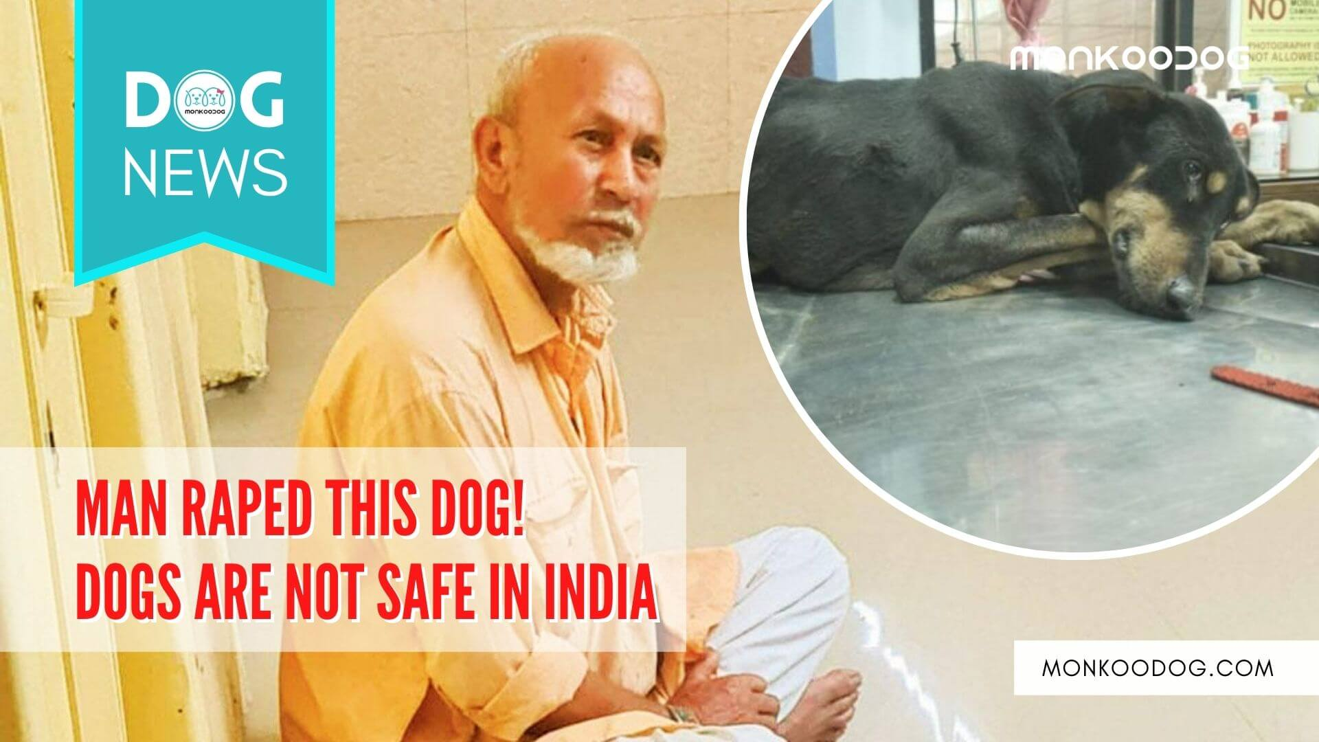 68 yrs old man caught in the act while raping dogs in the Andheri and Juhu area of Mumbai.