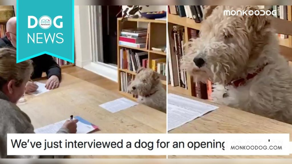 """A """"Dog-Interview"""" Went Viral After How He Replied In His Interview."""