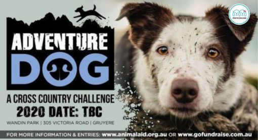 Adventure Dog 2021- The Cross Country Challenge