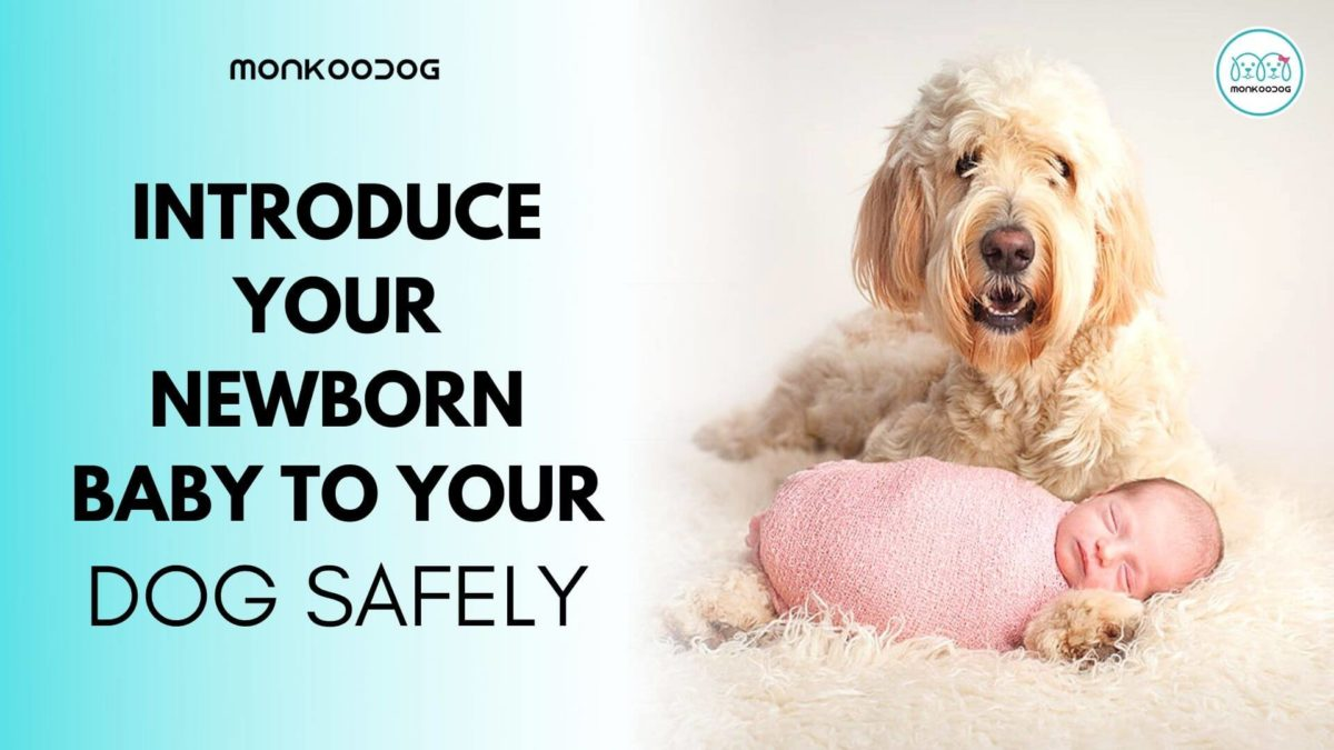 How To Safely Introduce Your Dog To Your Newborn Baby