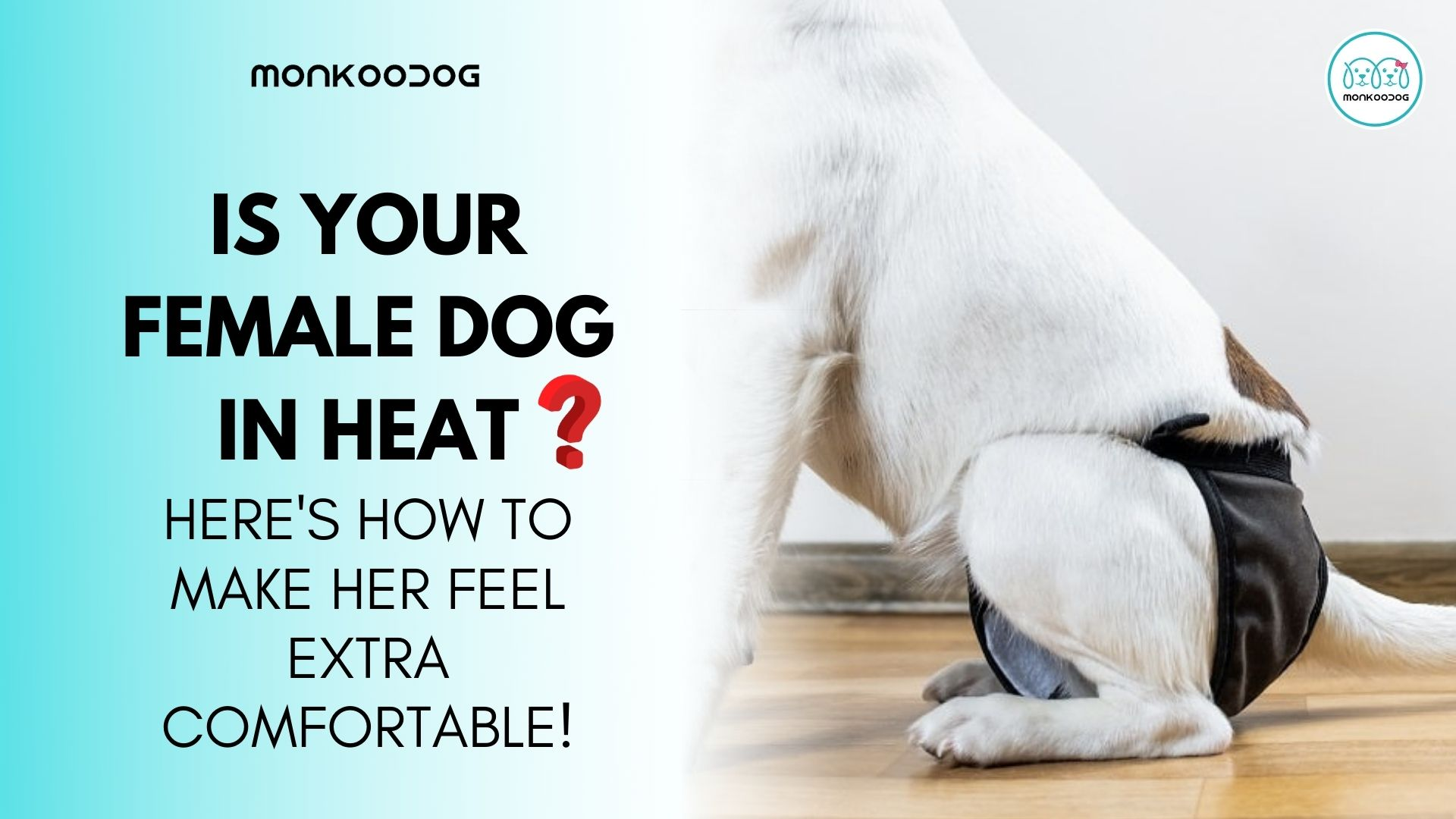 How To Take Care Of Your Dog In Heat