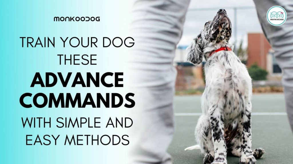 How To Teach Your Dog Advanced Training