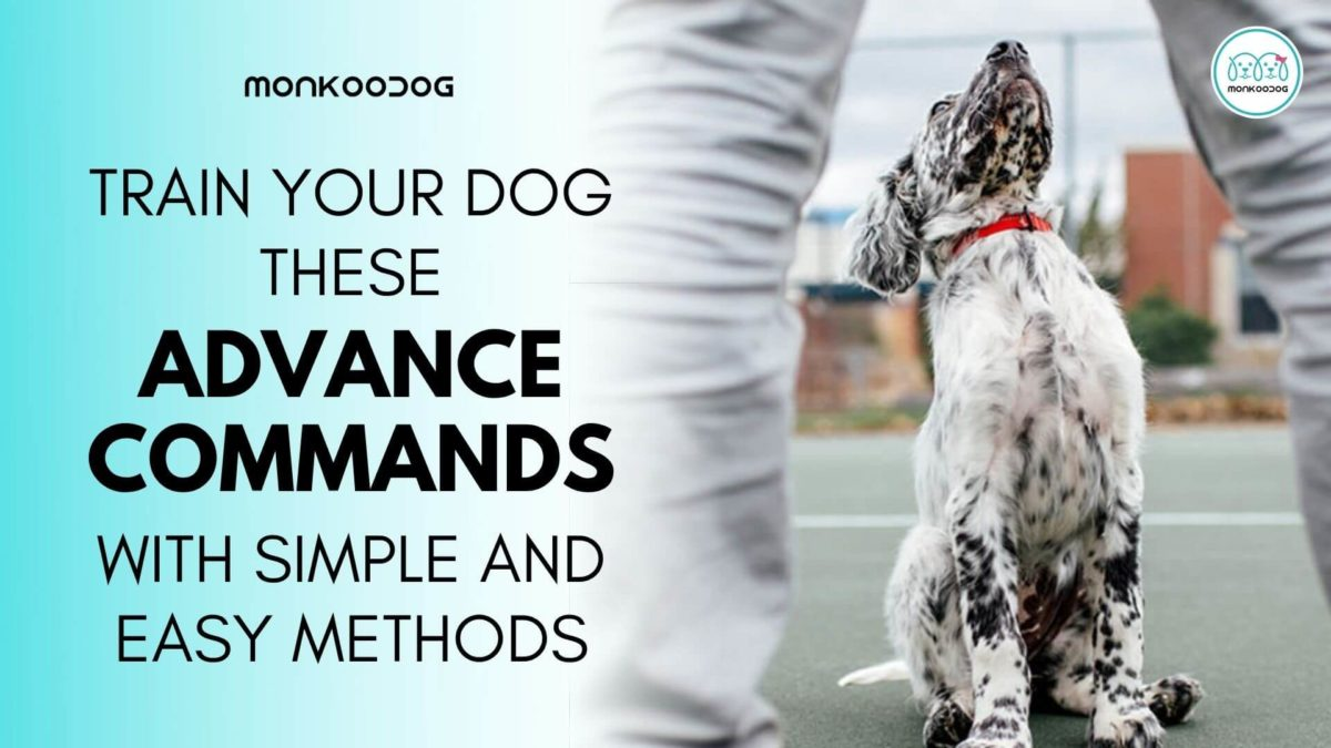 How To Teach Your Dog Advanced Training