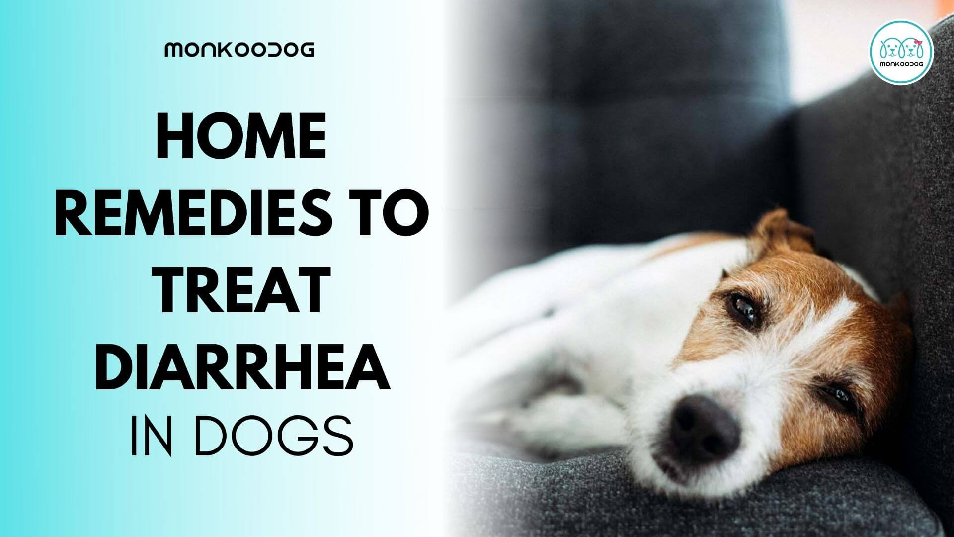 How To Treat Diarrhea In Dogs With Home Remedies