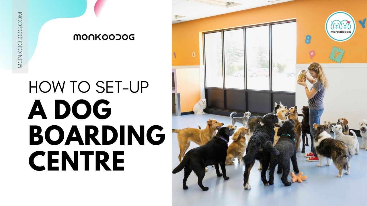 How to setup a dog boarding centre