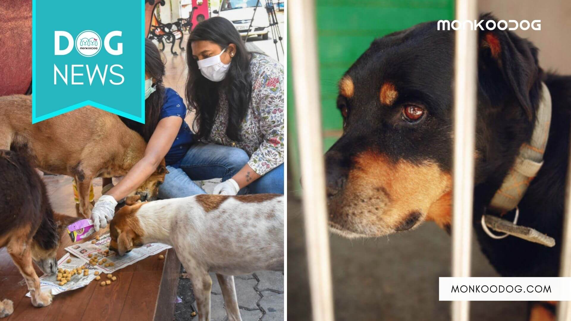 Two Animal Cruelty Incidents_ Priya Chauhan got pelted with stones, slipper, and abuse for feeding the strays, and China zoo caged a Rottweiler instead of Wolf.