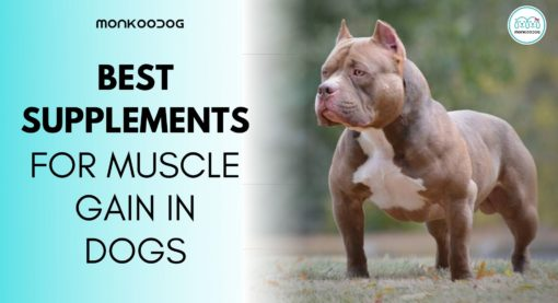 Best Supplement For Muscle Gain In Dog