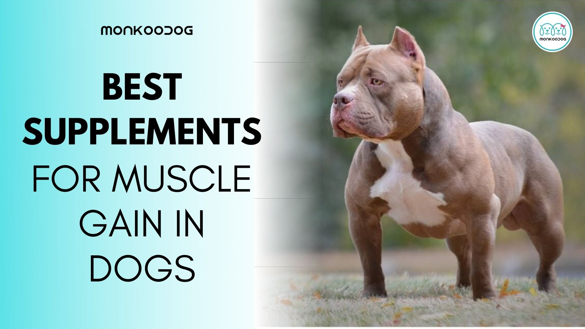 4 best supplements to gain weight in dogs