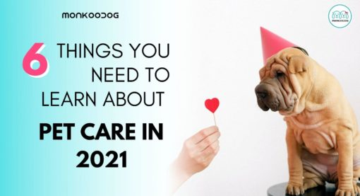 6 Things We Need to Learn About Pet Care in 2021