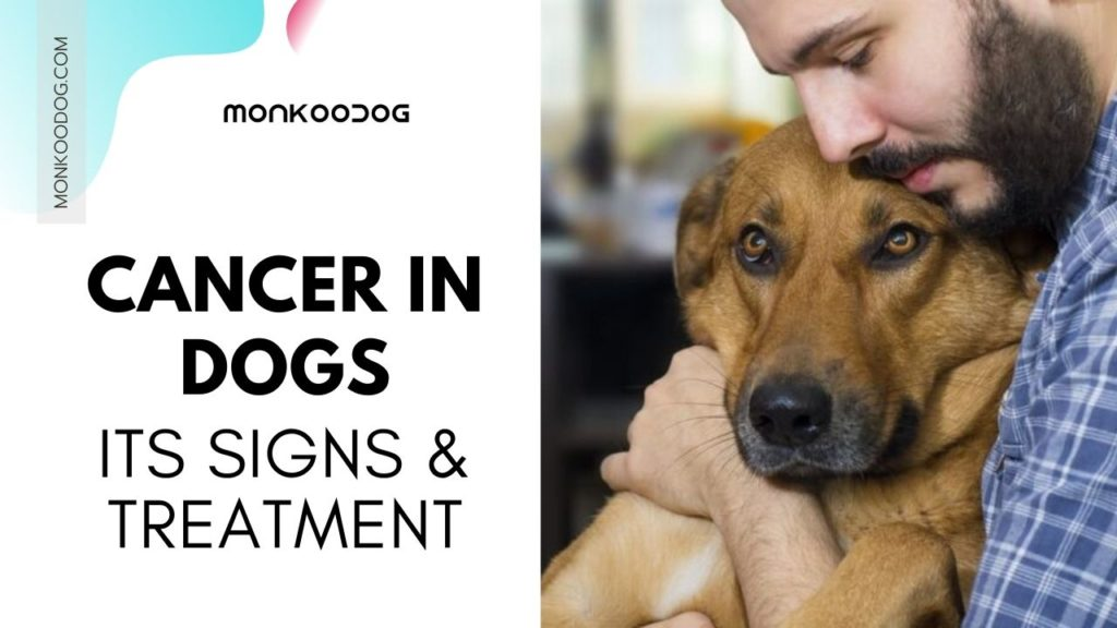 Caner in dogs. Its signs and treatments
