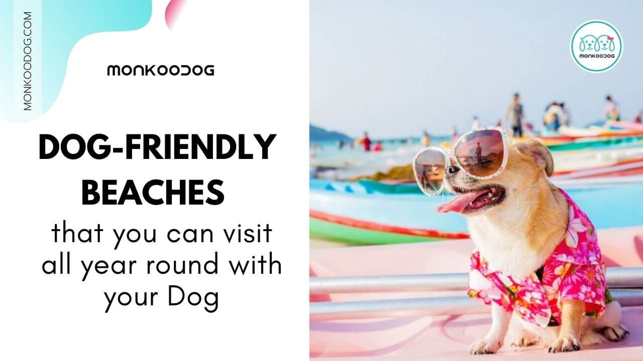 Dog Friendly Beaches You Can Enjoy All Year Round