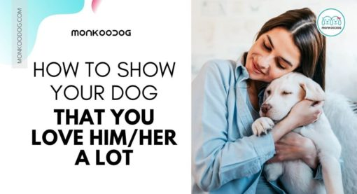 What is the right way to love your dog?