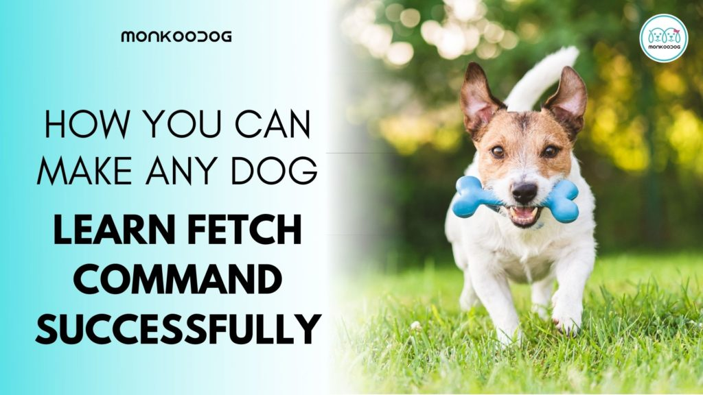 How to teach your dog to fetch successfully in first attempt