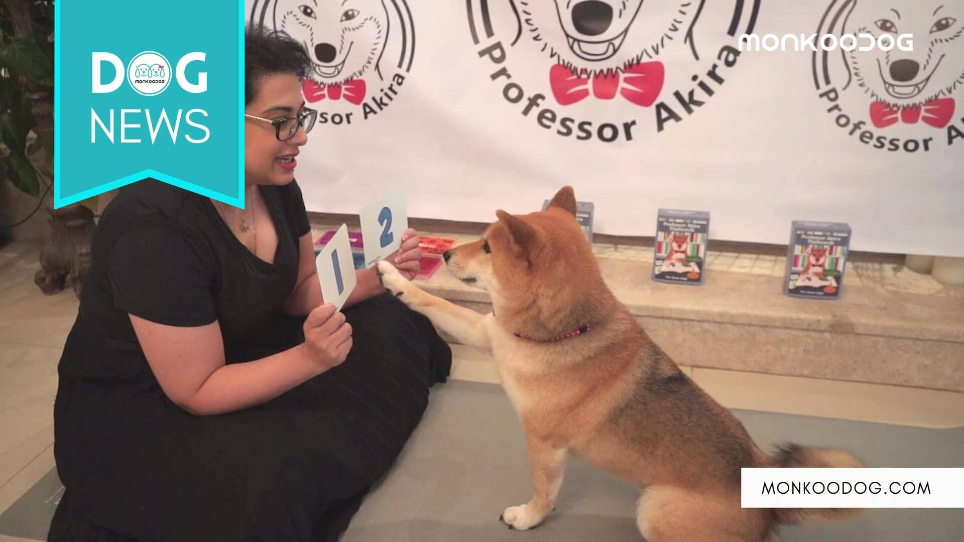 Meet Akira, World's Smartest Dog Who Can Solve Elementary Math Problems