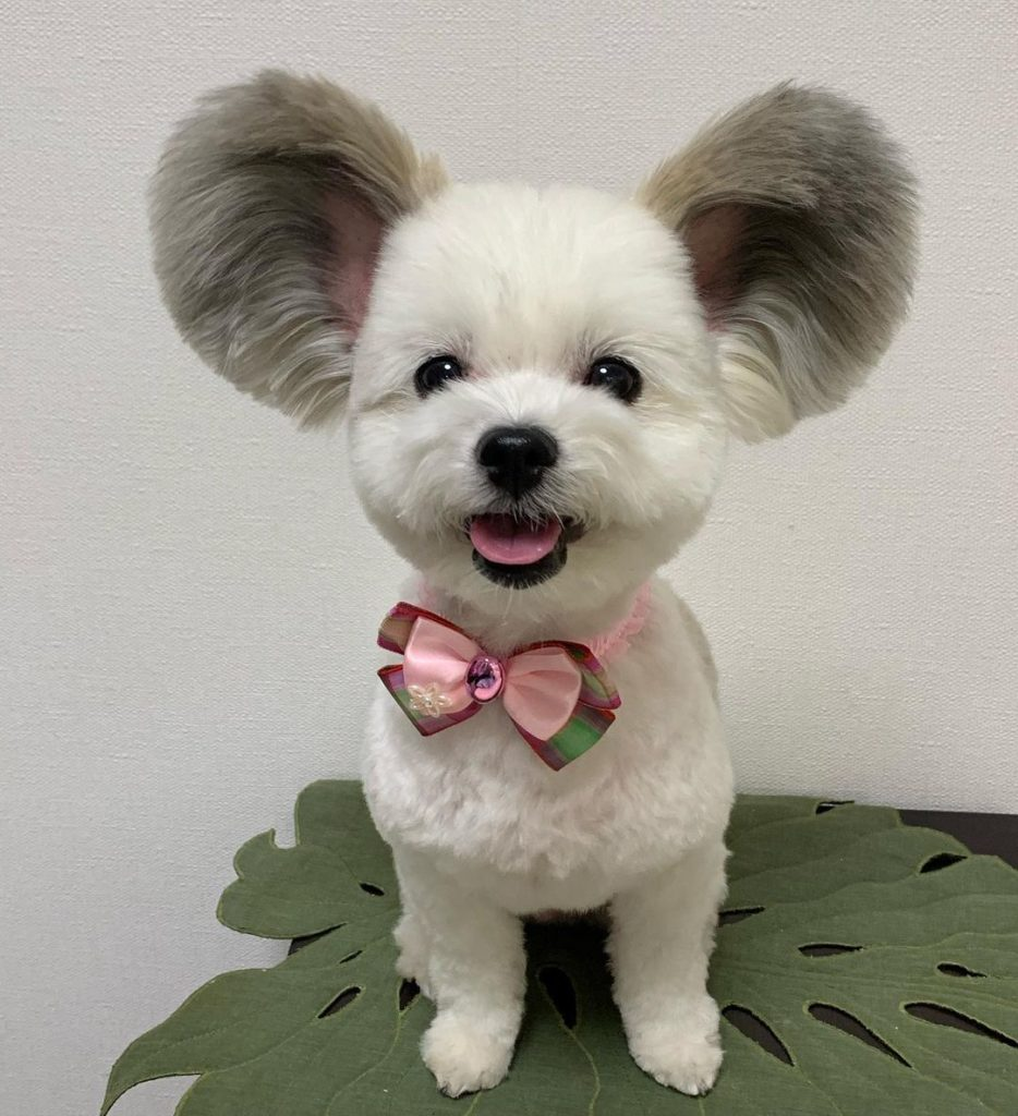 Mickey Mouse Ears On A Puppy