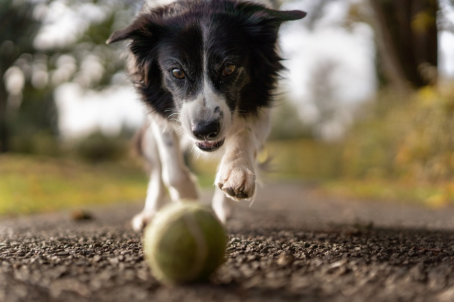 The Second Step is to teach the command 'Fetch'