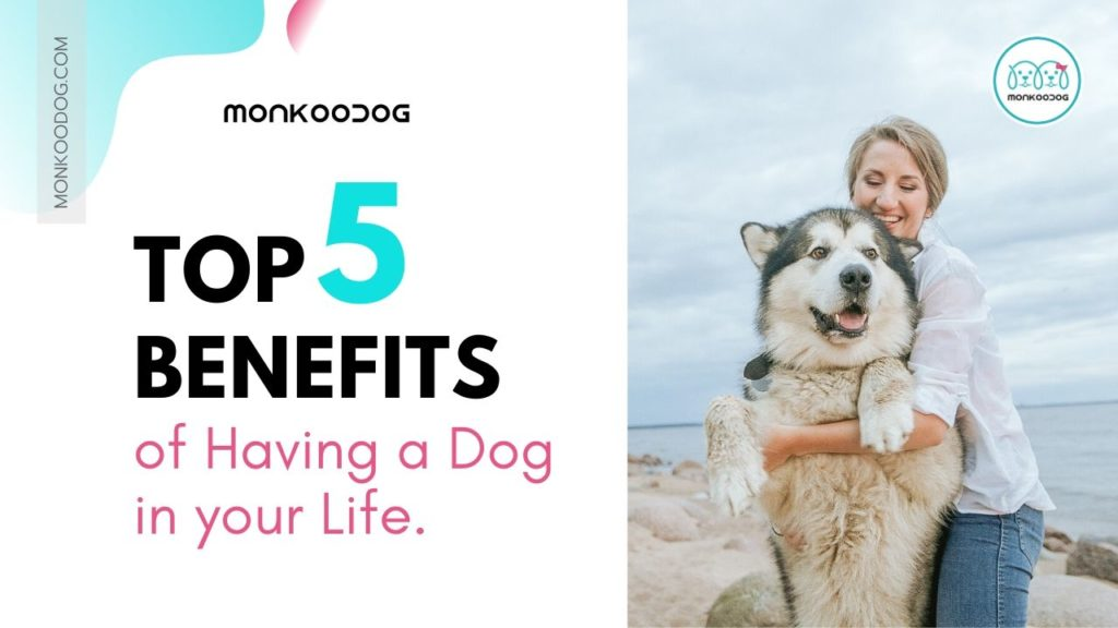 Top 5 Benefits of Owning a Dog in your life