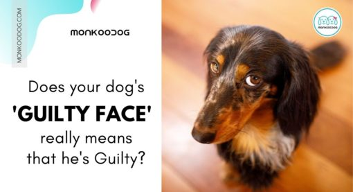 Why Do Dogs Give That Guilty Look?
