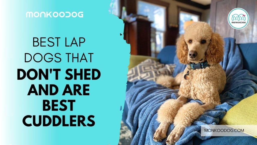 10 Low-Shedding Dog Breeds that make perfect couch companions for you
