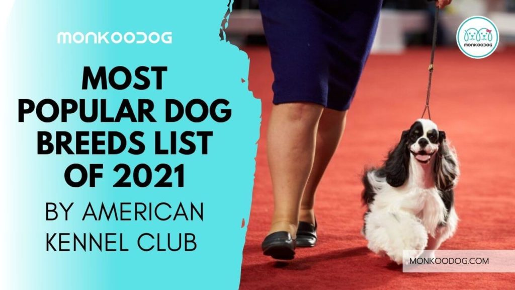 AKC Listed Most Popular Dog Breeds