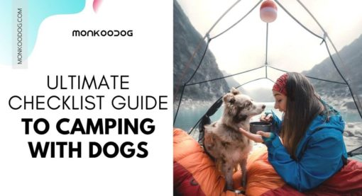 All You Need To Know About Camping With Dogs
