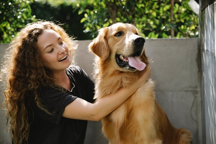 At number 4, the universally loved Golden Retriever